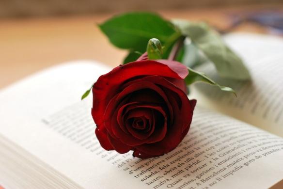 Rosa-i-llibre-Sant-Jordi